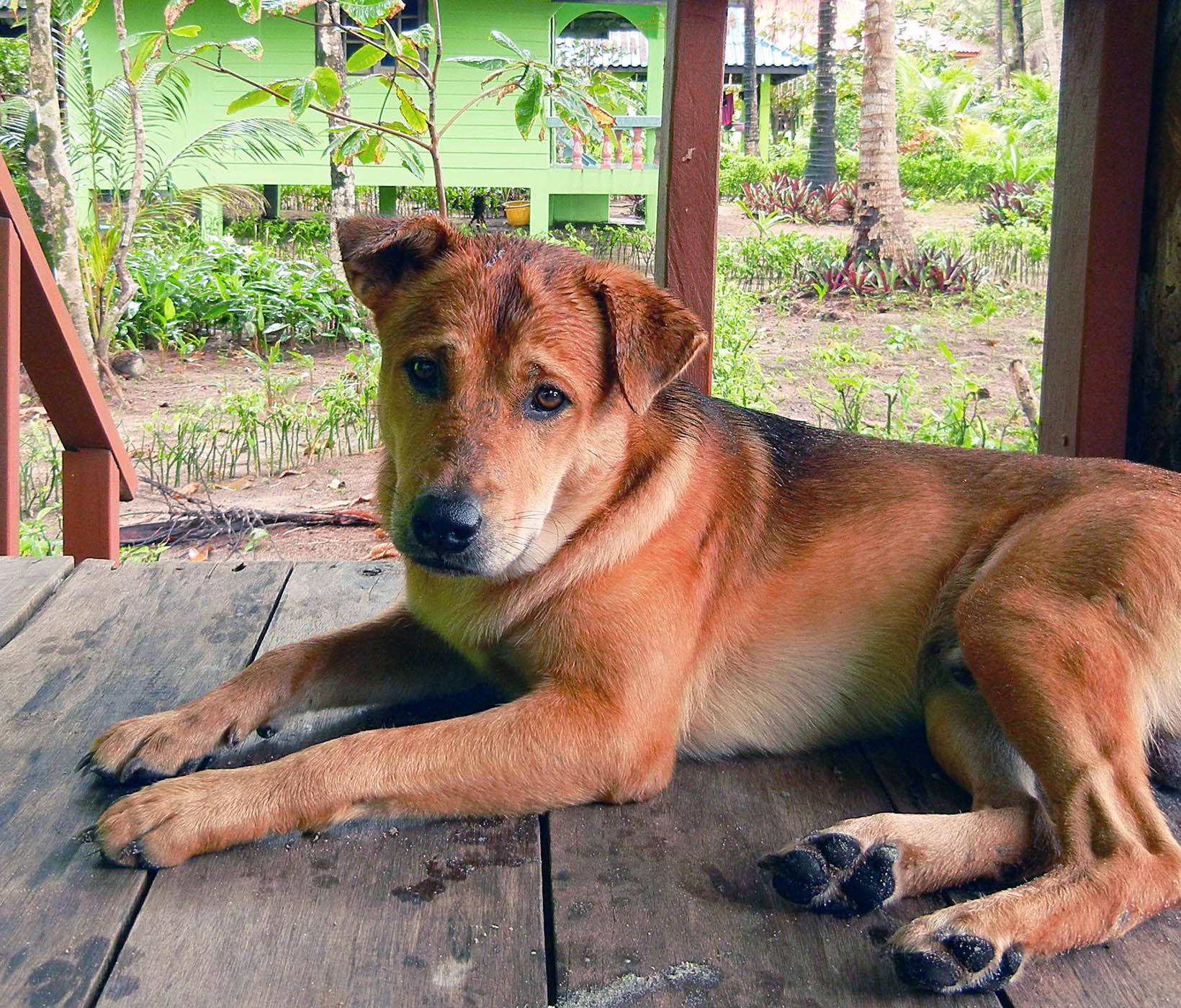 Hund an Orlaubsort in Thailand