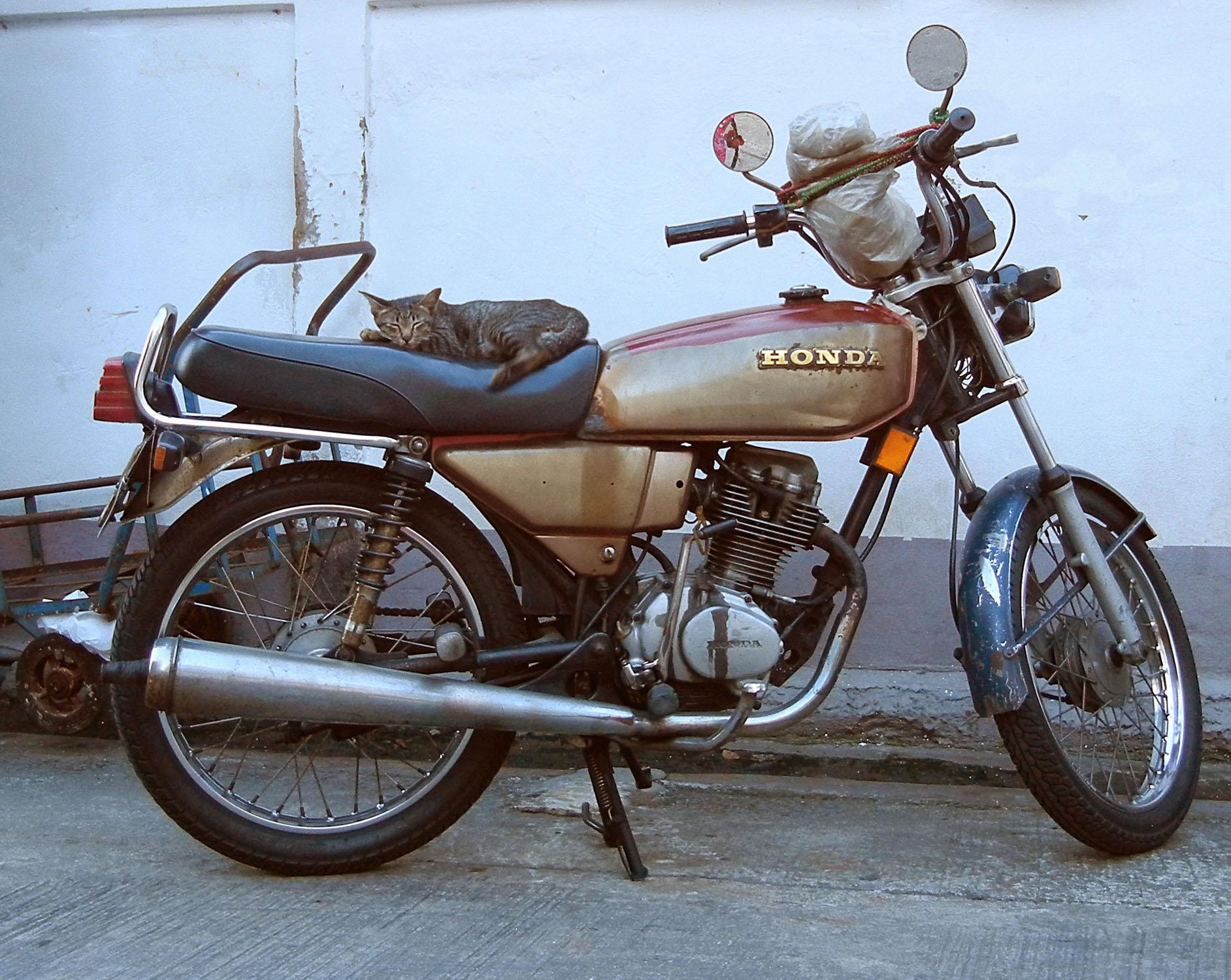 Katze auf Moped