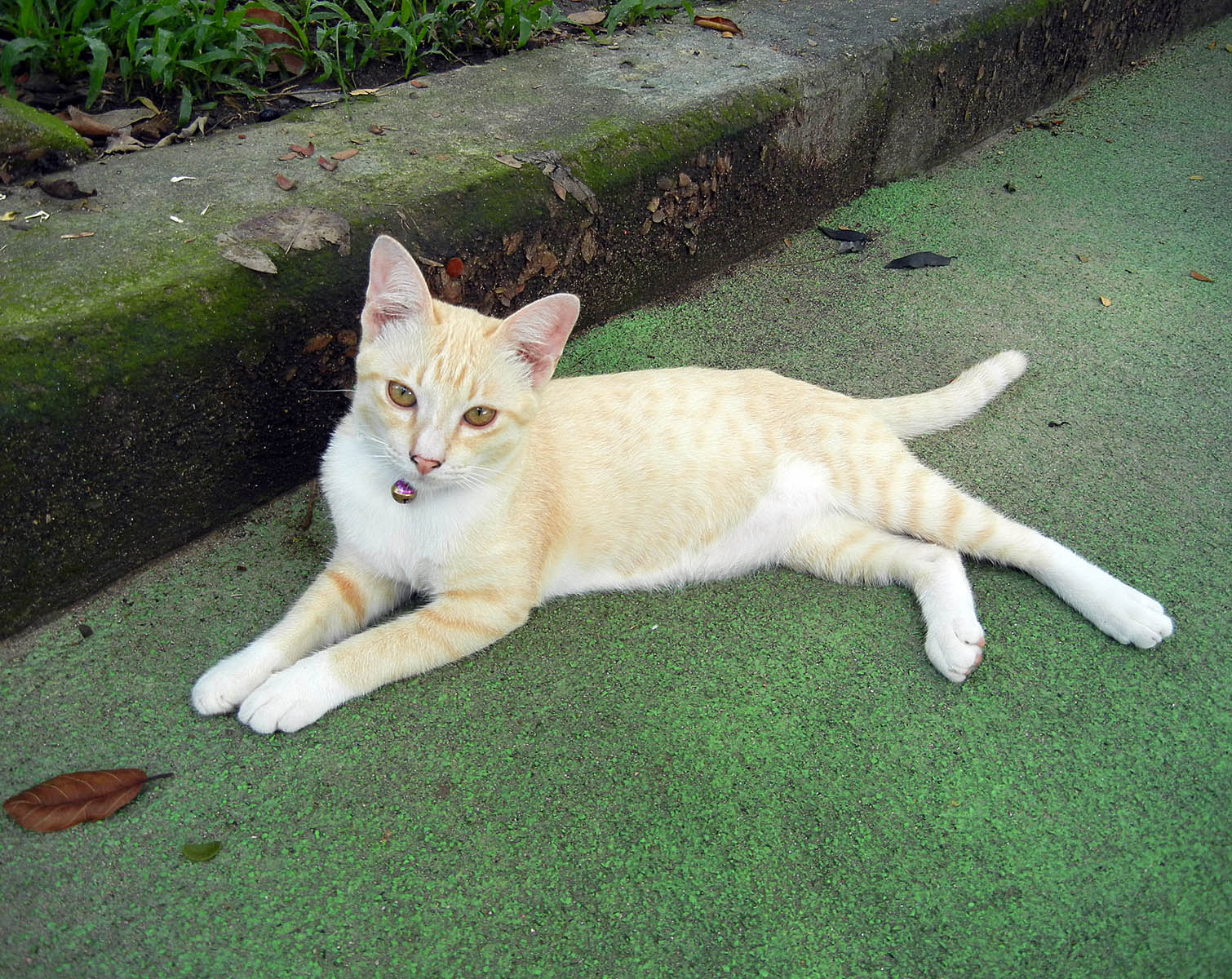 Katze in Bangkok