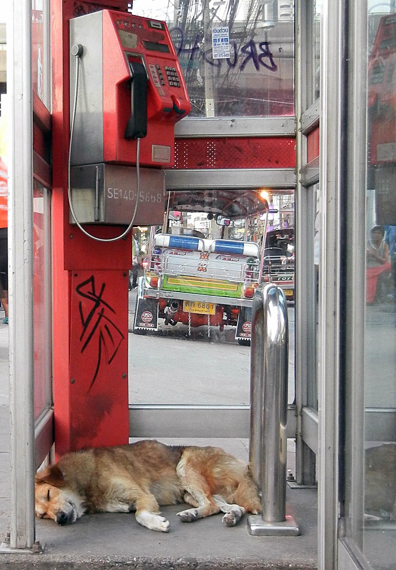 Hund in Telefonzelle