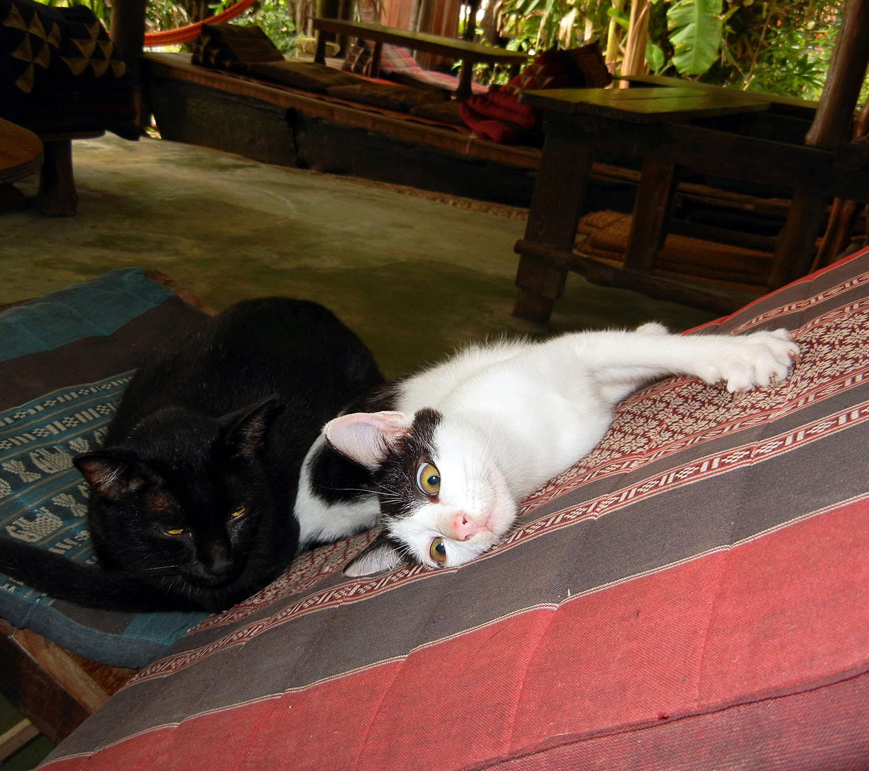 Restaurantkatzen in Thailand